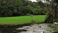 Amazonska prašuma, čudo prirode