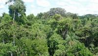 Lijek protiv raka skriva se u amazonskoj prašumi