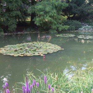 Botanicki Vrt Zagreb Ekologija