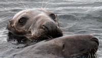 Arktičko podmorje prebrzo otpušta metan