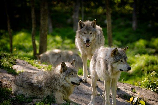 ugrožene životinje