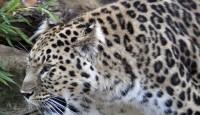 Najugroženije životinjske vrste