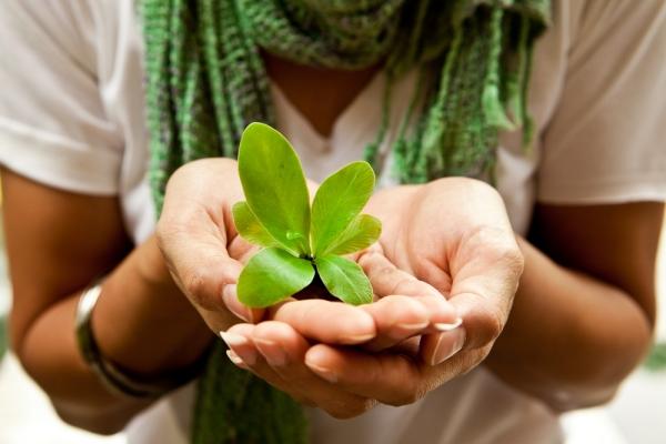 mladica biljke