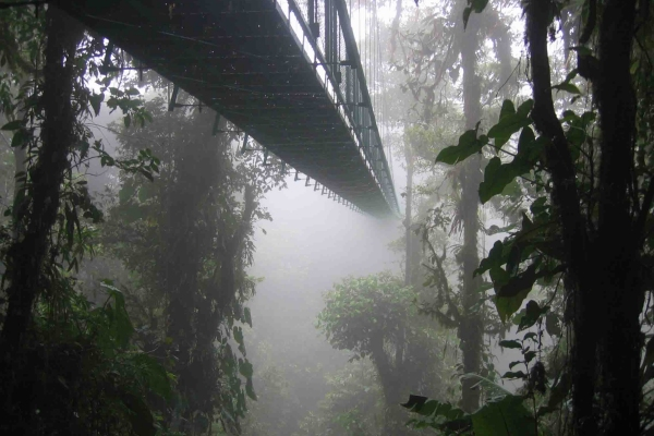 tropska kišna šuma