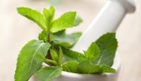 Ljekovito bilje u domu