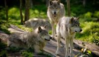 Ugrožene životinjske vrste u Hrvatskoj