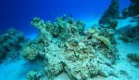 koraljni greben