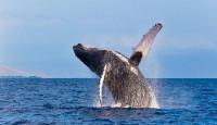 Kitolov i zaštita kitova