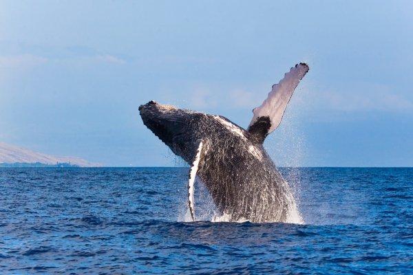 promatranje kitova