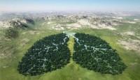 Zašto su šume važne
