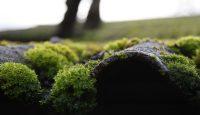 zeleni-krovovi